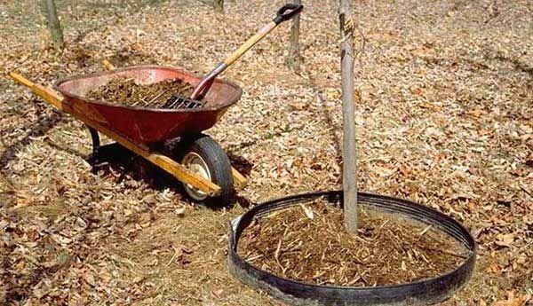 Осенняя подготовка почвы на участке — обработка от болезней и вредителей