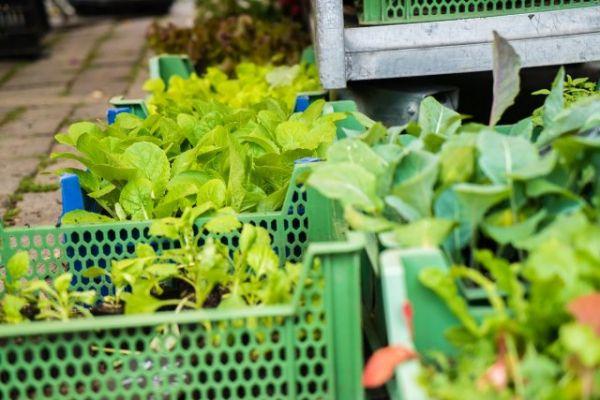 Бизнес на рассаде капусты: как за 4 месяца заработать 4000 долларов