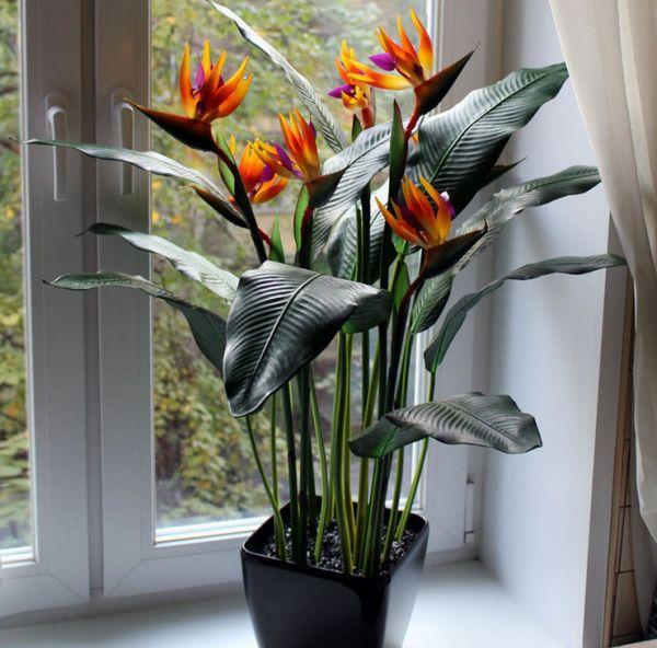 Стрелиция - экстравагантная красота у вас дома