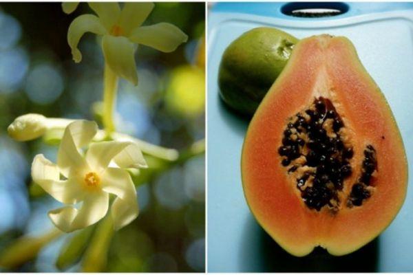 Вот как выглядят фрукты, овощи и ягоды до того, как попасть к вам на стол