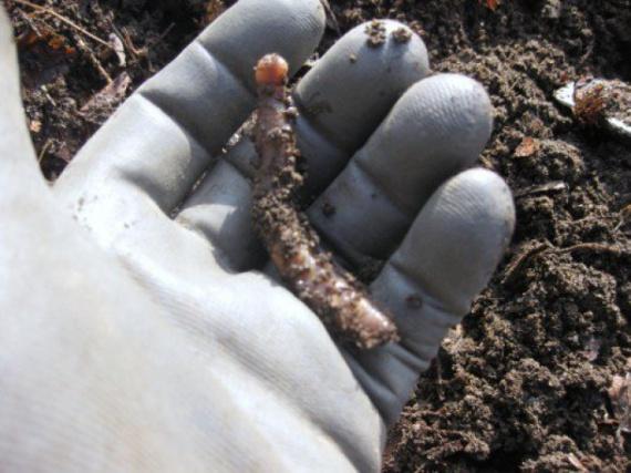 Как быстро избавится от сорняков без гербицидов и химии