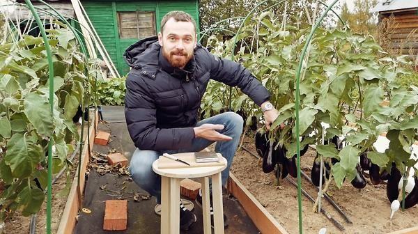 Выращиваем рассаду баклажанов: на что стоит обратить внимание