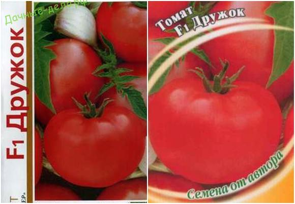 Какие самые лучшие, урожайные и стойкие к болезням сорта томатов для теплицы