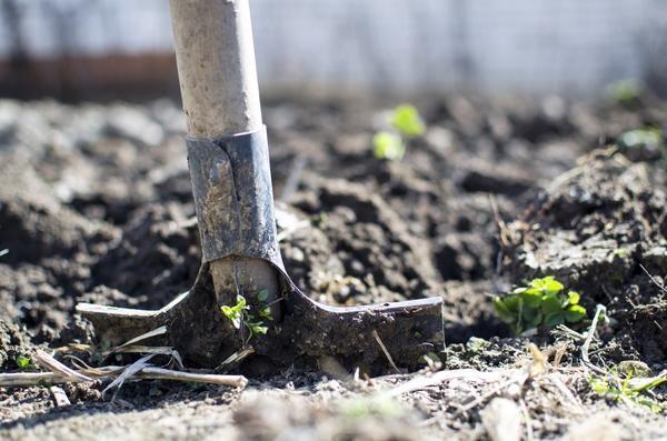 Секреты опытного агронома: сажаем картофель по-новому