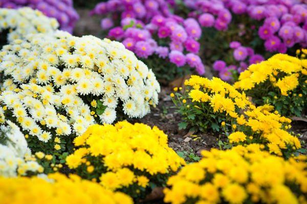 Солнцелюбивые растения