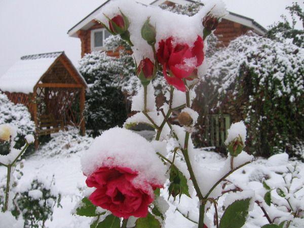 Блог -5 распространенных мифов о зимнем укрытии растений