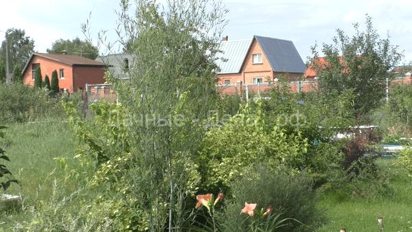 Живая изгородь из ивы своими руками, пошаговая инструкция с фото и видео материалами
