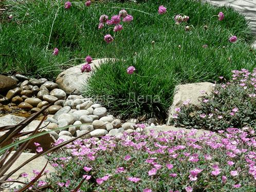 Самые популярные полевые цветы и луговые растения