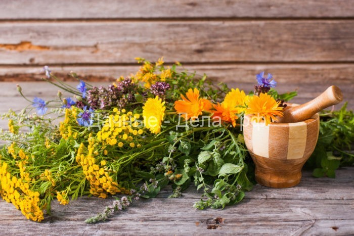 Как пряные травы защищают сад от вредителей - Огород, сад, балкон - медиаплатформа МирТесен 6