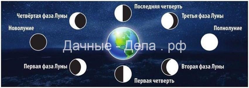 Луна в знаках Зодиака – Благоприятные дни для посадок