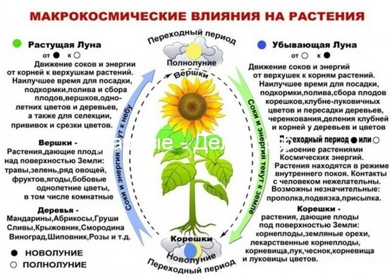 Лунный посевной календарь на январь 2021 года для садовода, огородника и цветовода