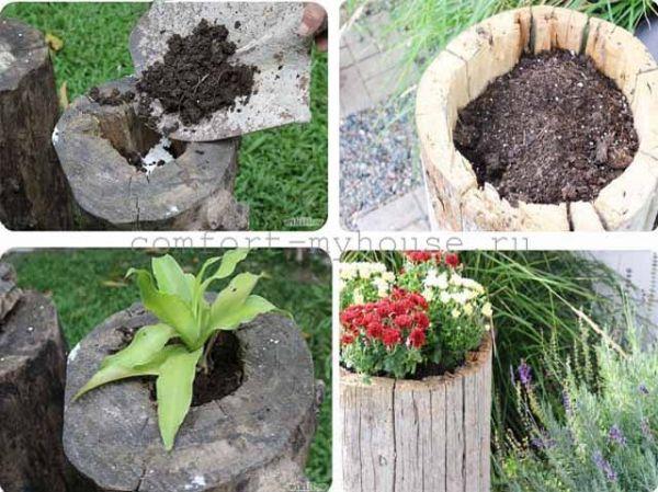 Как украсить пень в саду. Клумбы из пня
