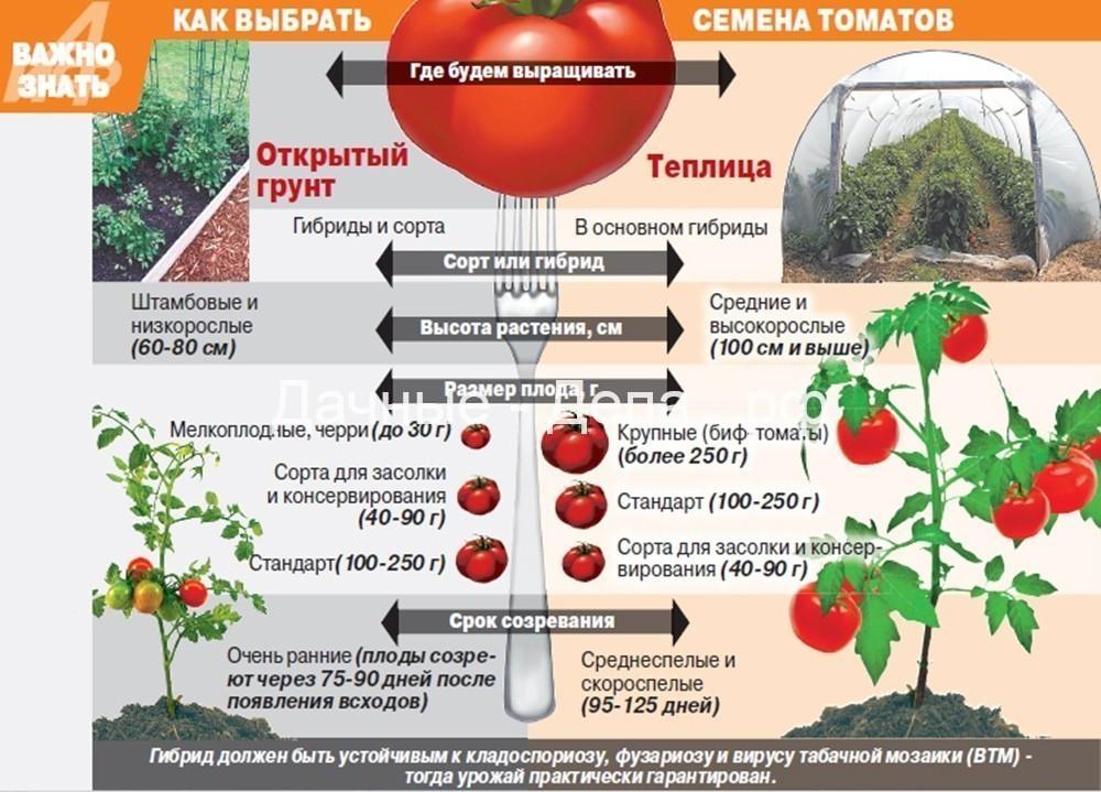 Помидоры (томаты) – как и когда сажать в 2021 году?