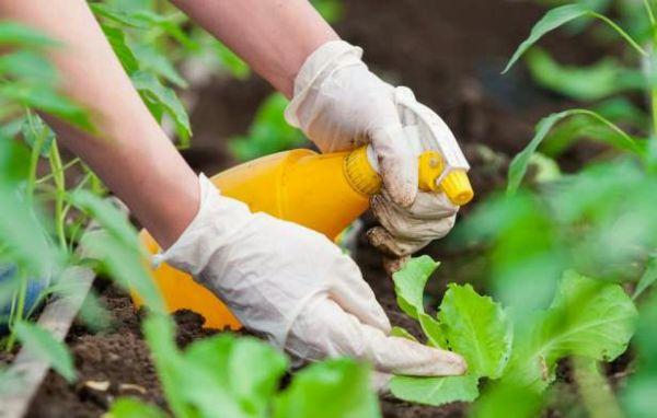 Календарь садовода-огородника на летние месяцы 2018 года