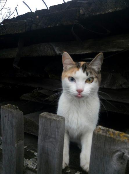 Крутая кошка!