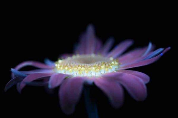 Картина мира - как выглядят цветы в ультафиолете
