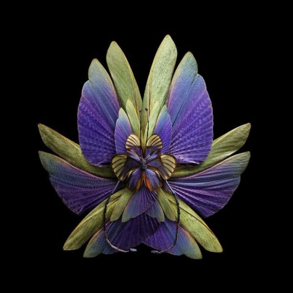 Цветы, созданные человеком
