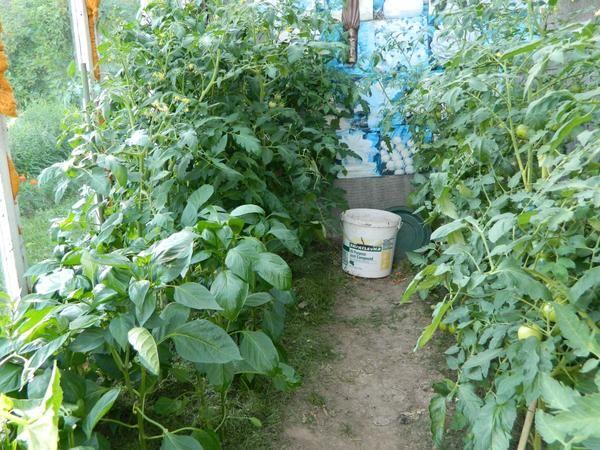 Удачные виды мульчи для сада и огорода