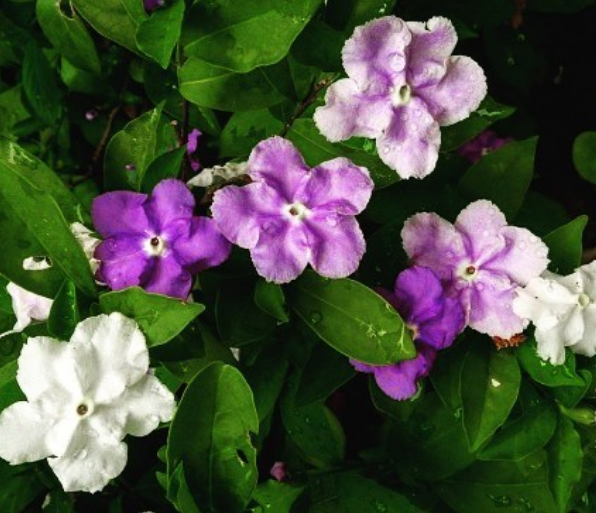 5 комнатных растений, которые принесут в твой дом счастье и любовь