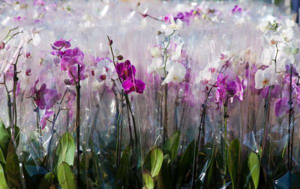 Как выбрать здоровую орхидею в магазине, чтобы любоваться ею годами