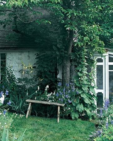 Как создать чудесный дикий сад