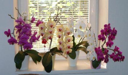 Если не можете понять причины своих неприятностей — выкиньте орхидею из дома