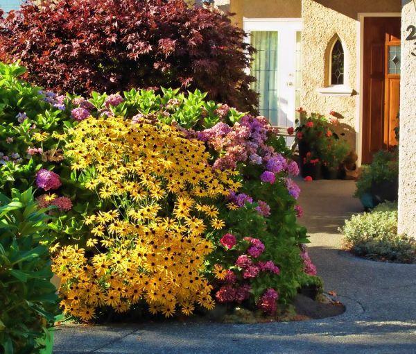 Цветник в августе украсит рудбекия: лучшие виды