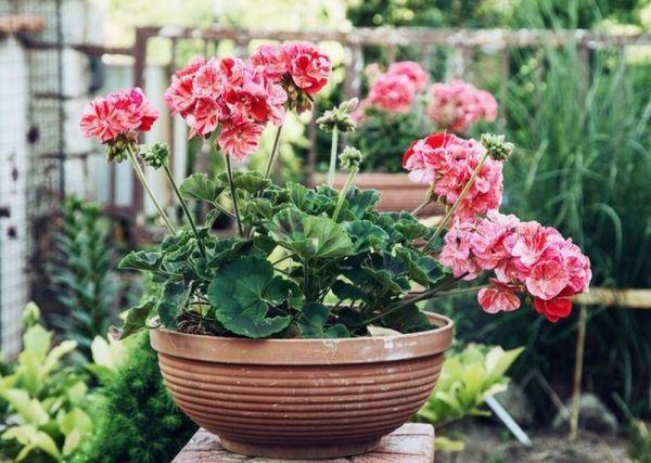 Опасные растения, которые не стоит выращивать на своем подоконнике!