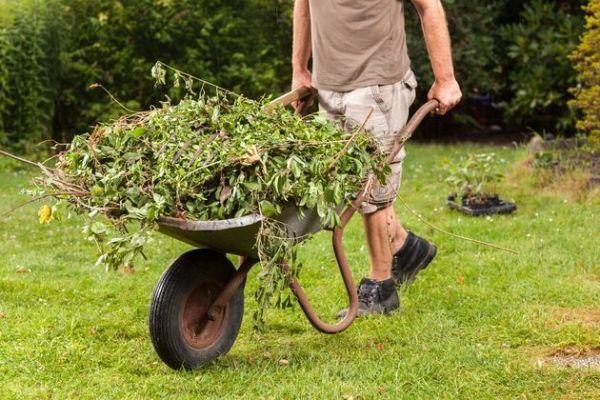 Ягодник: уход после сбора урожая