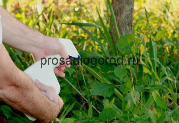 Применение уксуса на огороде против вредителей и сорняков