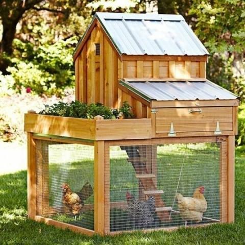 Домик для птицы цыплят 5