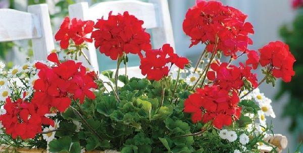 Какие цветы нужно держать дома и почему с