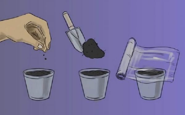 8 правил выращивания базилика в горшках: секреты огородника.