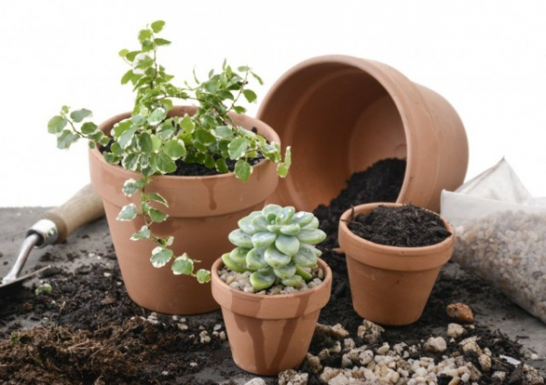 Всё о готовых субстратах для комнатных растений