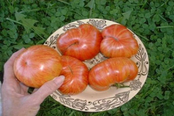 Описание сорта томата Винтейдж вайн, его характеристика и урожайность