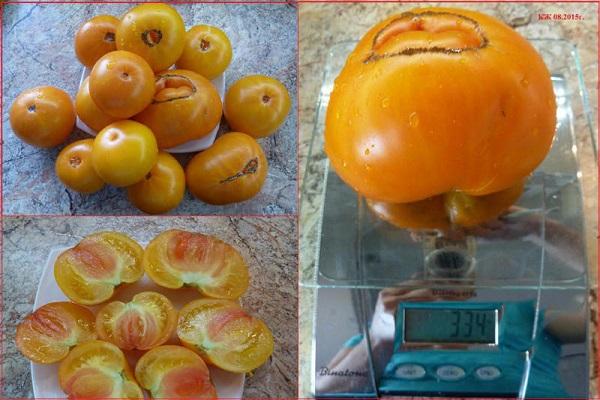Описание сорта томата Казахстанский желтый, его урожайность и выращивание