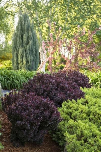 Оформление сада с акцентом на деревья, кустарники и хвойные